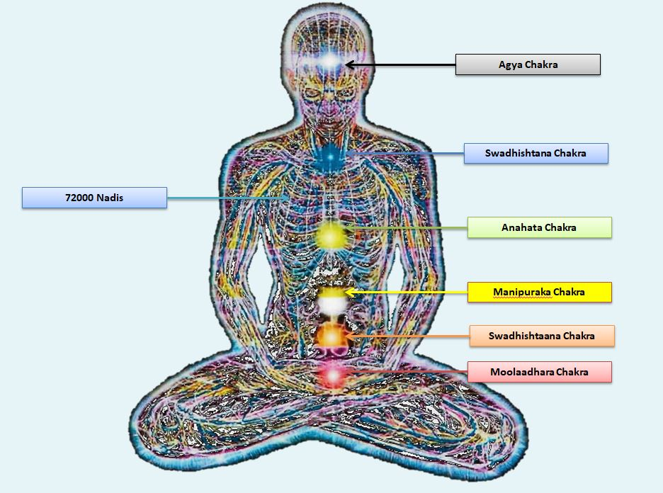 Pranic Body Distribution